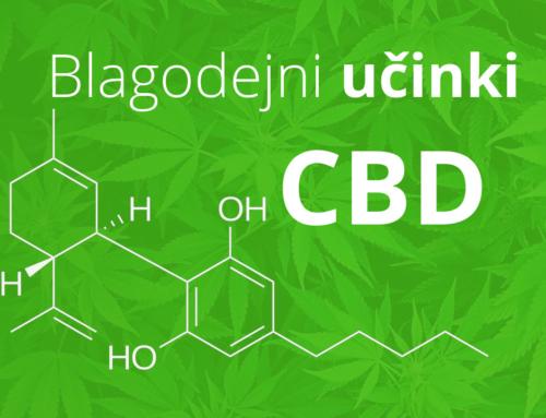 Učinki CBD – Kakšni so učinki CBD?