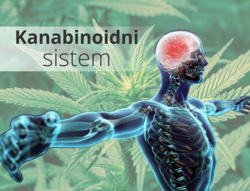 Kanabinoidi in vpliv na naše telo in zdravje